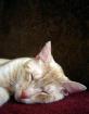 Sleeping the Day ...
