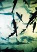 Fish Silhouette