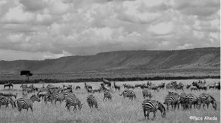 The Mara.