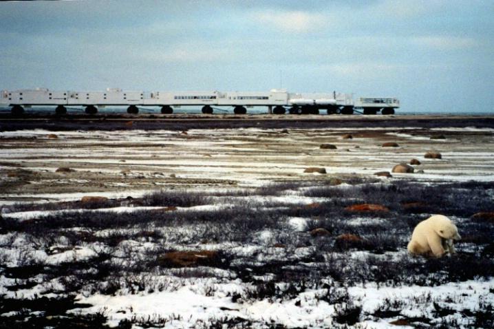 Tundra Lodge, Churchill, International Wildlife - ID: 3575218 © Jeri Schultz
