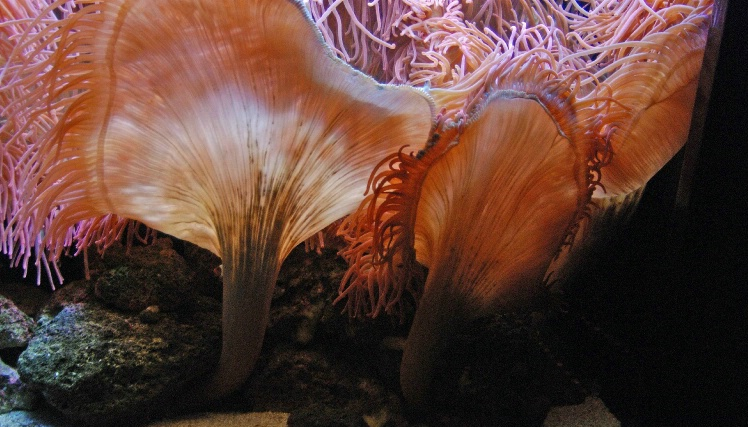 Aquariums can provide erie lighting to sea-life.