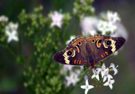Prized Nectar