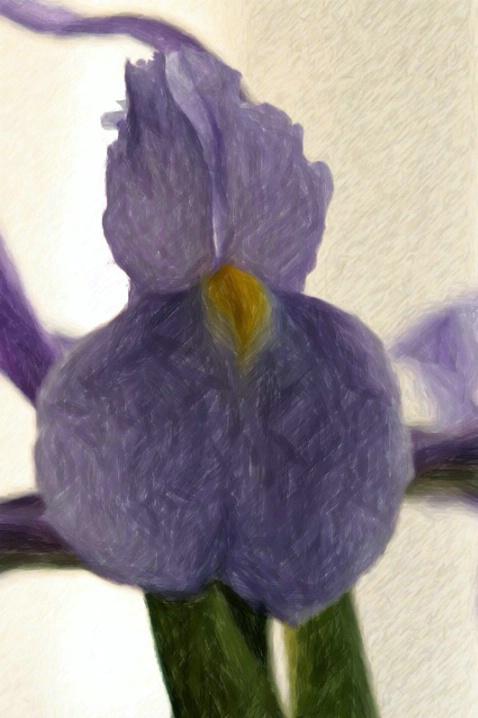 The Iris Spring Collection - Purple Sundress - ID: 3591739 © Agnes Fegan