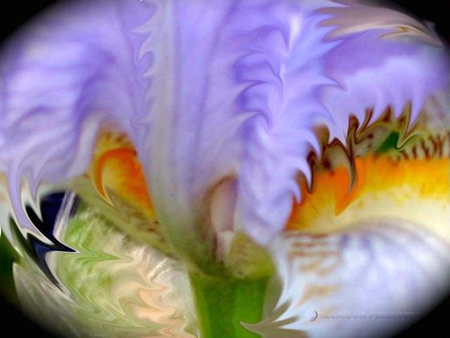 Manipulated Iris