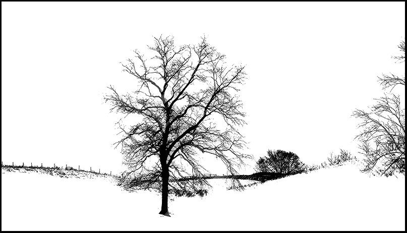 Pasture in Snow