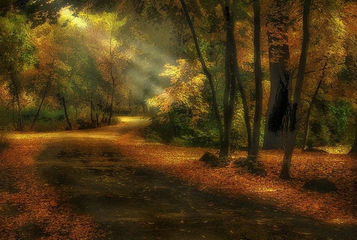 Sunlit Grove