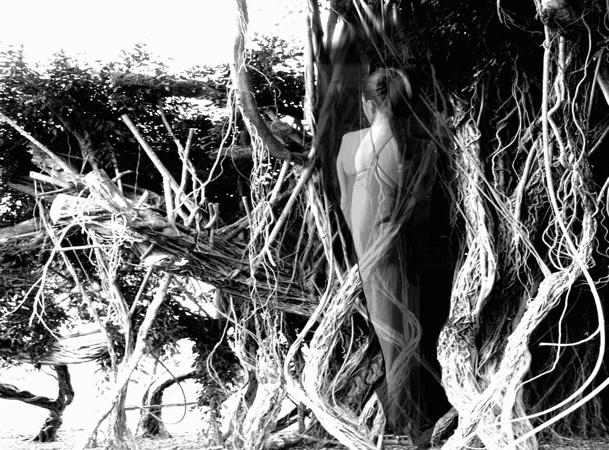 mys-tree