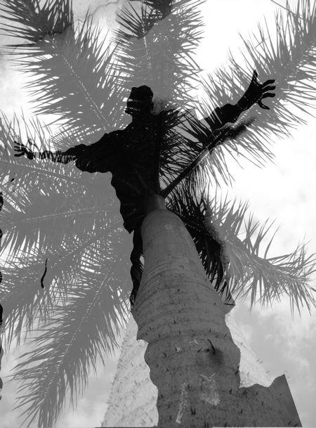 palm spread