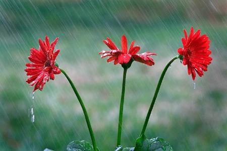 April Showers....