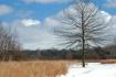 Tree of Promise
