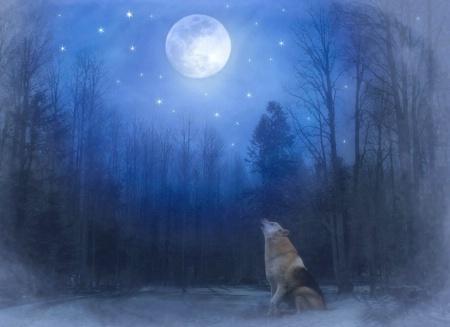 Lone Wolf 506