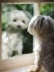 Doggie Reflection...