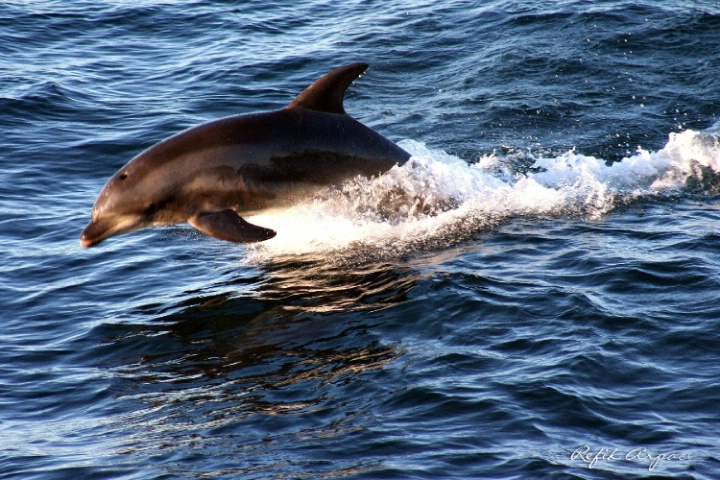 WALK OF A DOLPHIN