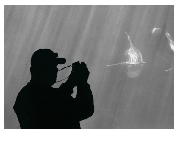Capturing a Dolphin