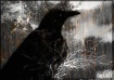Cloaked Raven 2
