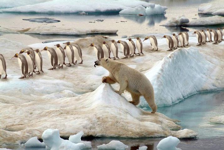 Dream'in Of Penguin A La King - ID: 3664931 © Daniel Schual-Berke