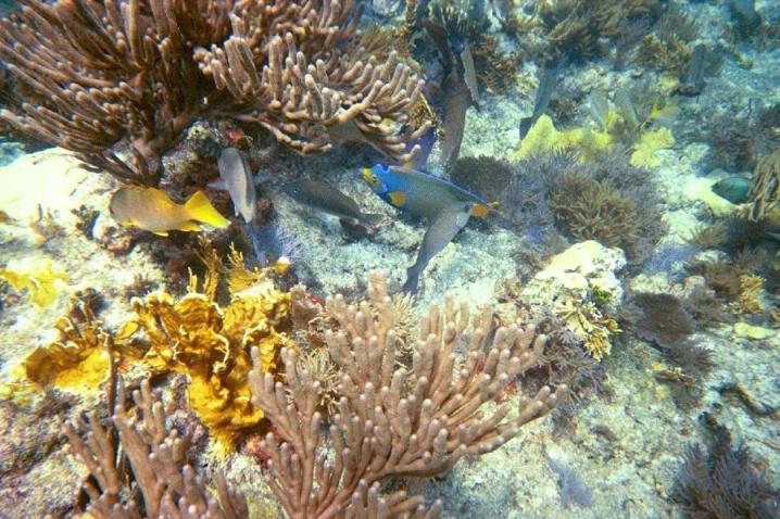 Atlantic Ocean Floor - ID: 3673452 © Mary Iacofano
