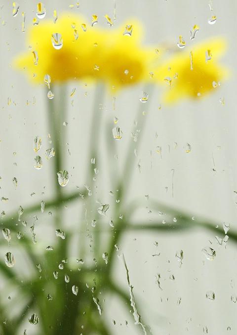 Rain in April
