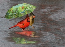 Photography Contest Grand Prize Winner - April 2007: April Showers Are For The Birds