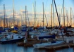 A Forest of Masts