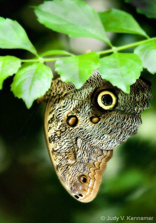 Butterfly with camo