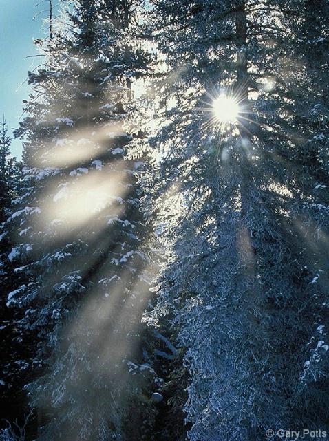 Wintertime Starburst - ID: 3701889 © Gary W. Potts