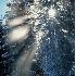 2Wintertime Starburst - ID: 3701889 © Gary W. Potts