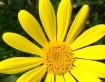 """""""Mr. Yellow&#..."""