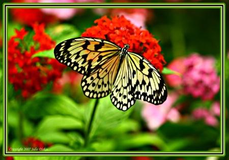 White Flutter