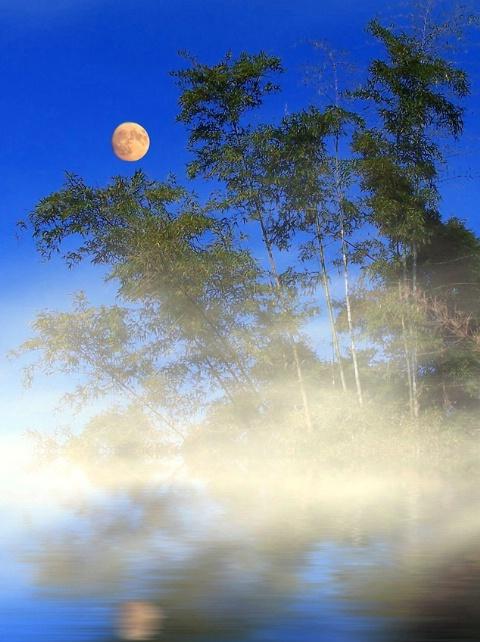 misty bamboos