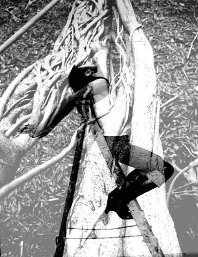 melissa with banyon