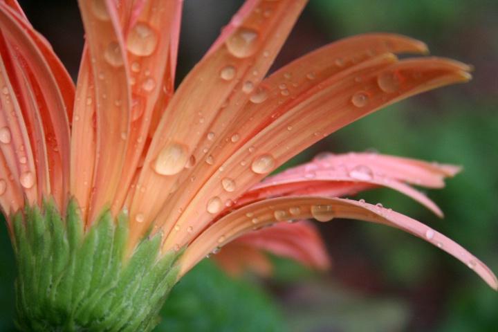 drops of  April rain...