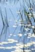 Reeds 1