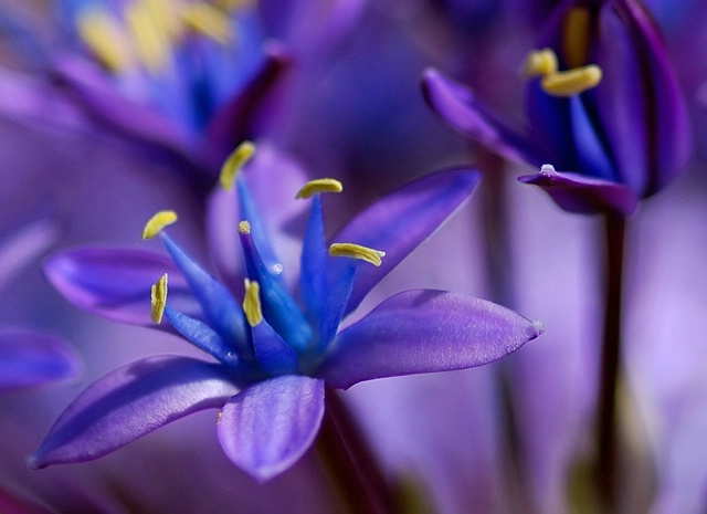Purple, Blue, and a Touch of Yellow