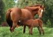 Maija and Baby