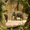 And the Elephants...
