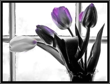 """ Lavender Splash """