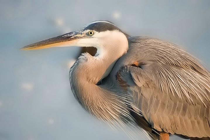 Bird on the Prey