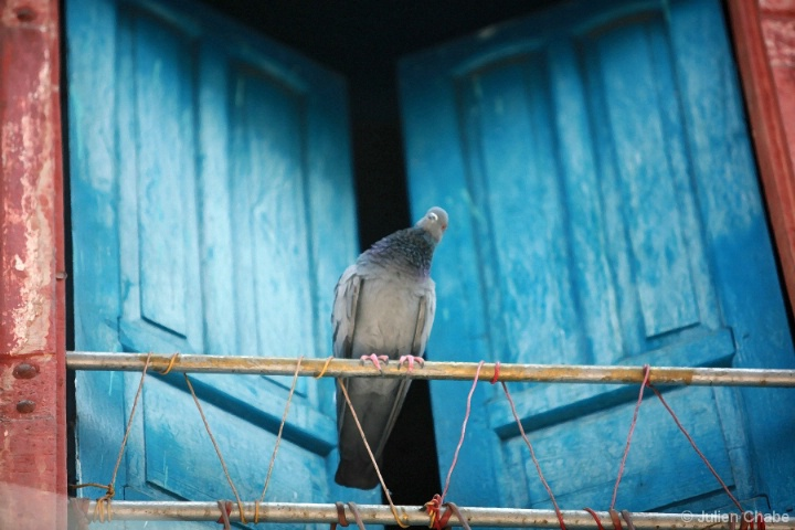 Magic pigeon