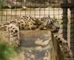 Leopard, San Dieg...