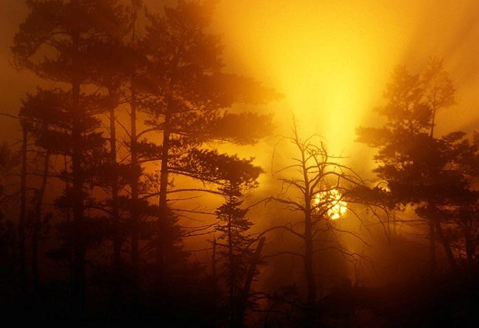 Awakening! - ID: 3795094 © Gary W. Potts