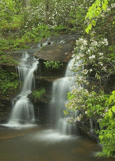 Wildcat Falls, Mt. Laurel, Clemson Forest - ID: 3798063 © george w. sharpton