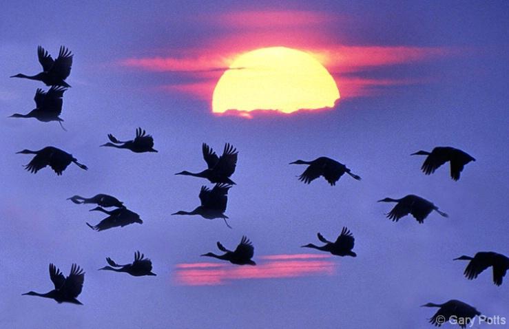 Sandhills At Sunset - ID: 3800158 © Gary W. Potts