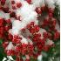 © Katherine Sherry PhotoID# 3804487: berries