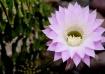 Brain Cactus in B...