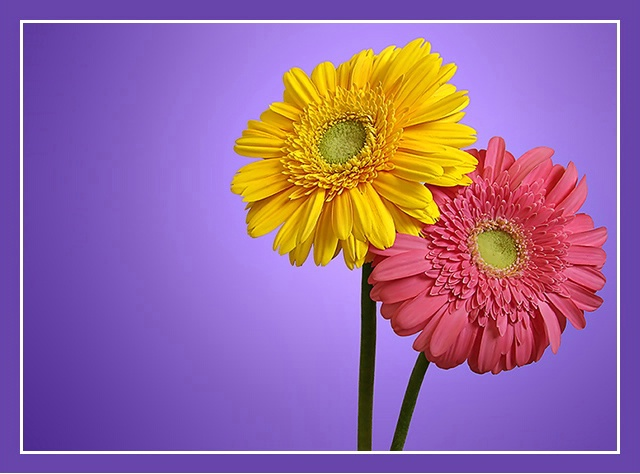 Two Flowers..