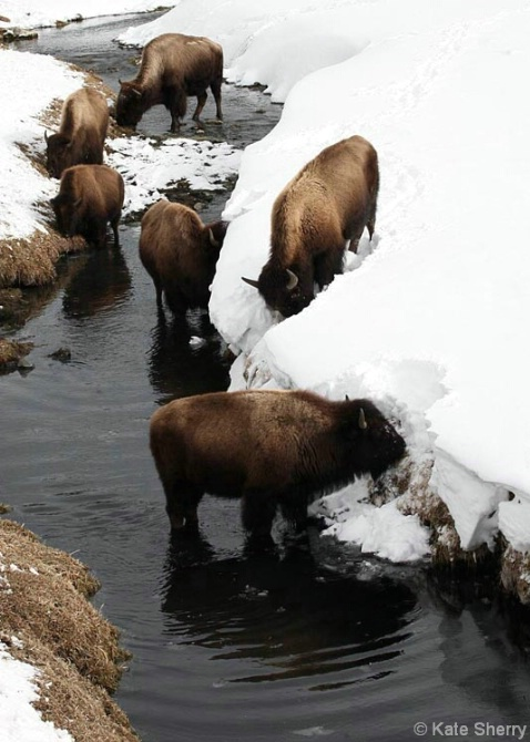buffalo_creek3 - ID: 3837057 © Katherine Sherry