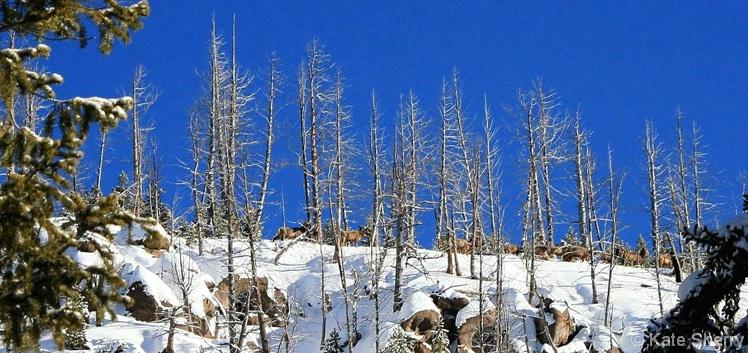 Elk Ridge - ID: 3837086 © Katherine Sherry