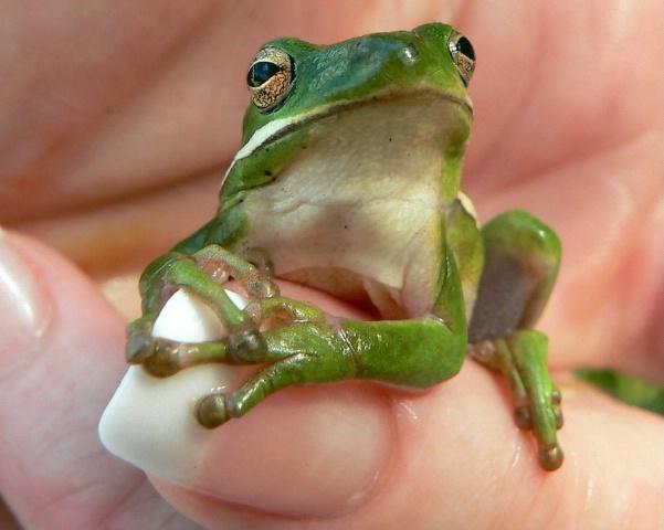 Little Green Gripper