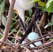 Checking Eggs